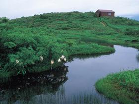 赤池周辺では貴重な動植物やお花畑が楽しめる