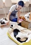 子犬工場に心痛め「保護猫カフェ」