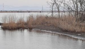 男児の遺体が発見された現場。奥に見えるのは新保橋=19日午後4時55分ごろ、福井県坂井市三国町新保