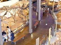 恐竜博物館コロナ越え3カ月ぶり再開