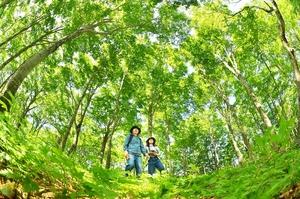 新緑から木漏れ日が注ぐ平家平のブナ林=6日、福井県大野市