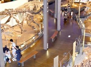 距離を取って展示物を見る家族連れら=6月15日、福井県勝山市の福井県立恐竜博物館
