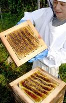おおい町で養蜂町民じわり増加