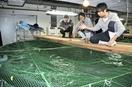 福井県立大学に水産養殖の専門学科