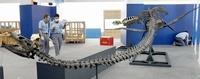 恐竜時代の海の猛者「海竜」たちが福井に集結 7月16日、福井県立恐竜博物館で特別展