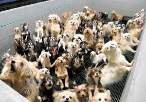ブロックで囲まれた「マス」にすし詰め状態になっている犬たち=昨年12月、福井県坂井市内(県内動物愛護グループ提供)