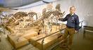 恐竜博の一押し標本の解説動画配信