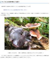 ツキヨタケなど野生キノコによる食中毒に注意を呼び掛ける福井県のホームページ