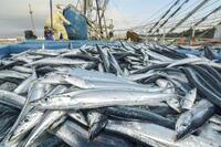 2019年漁獲量は過去最低