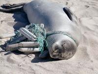 海のプラごみ対策、条約検討を