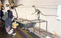 「恐竜王国」一層PRへ 勝山・県立博 福井県コーナー一新 発掘や研究 成果を網羅 140点追加、骨格も見直し