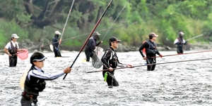 アユ釣り解禁日に竿を傾ける釣り人たち。今年の釣果は不振を極めている=6月10日、福井県永平寺町松岡上合月の九頭竜川