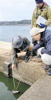 監視パトロール中に野鳥の死骸が見つかり、回収する職員=19日、福井県あわら市の北潟湖