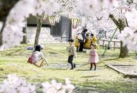 福井県内各地の桜スケッチ