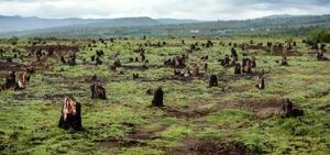 農地にするため伐採され、火が放たれたマダガスカルの森林の跡地(IPBES事務局提供)