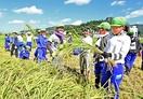 暑さに負けず児童100人稲刈り体験