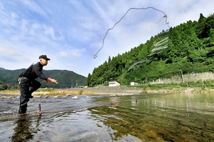 落ちアユを狙って素早く網を投げ入れる足羽川漁協組合員=11日、福井市境寺町の足羽川