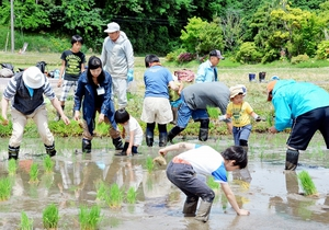 苗を手植えしていく親子連れら=27日、福井県越前市都辺町