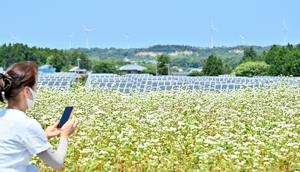 青空の下、満開を迎えたソバの花=6月24日、福井県あわら市蓮ケ浦