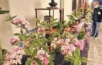 盆栽や山野草 愛好団体披露 高浜公民館