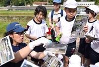 川に生き物いっぱいだ 永平寺町・吉野小児童 調査 豊かな自然環境を実感