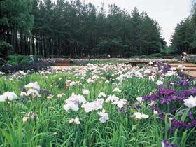 50種類以上の野鳥が生息し、季節の花が咲き誇る