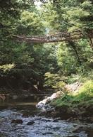 ふくい音風景(30) かずら橋(池田町) せせ…