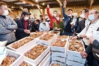 越前がに12月の半値 1月単価 「GoTo」停止で 漁期全体は高値水準