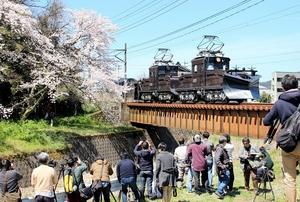 ラッセル車「テキ521」と桜の共演を撮影する鉄道ファンら=4月13日、福井県永平寺町東古市