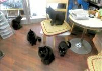 自殺志願の男性を悩み相談所へと導いた一匹の黒猫 真冬の東尋坊、偶然の出合い