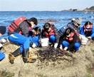 海の恵み 岩ノリ収穫 国見中 伝統行事に挑戦