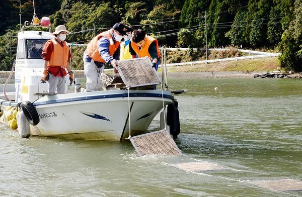 小浜の漁業者らアマモ場再生へ活動