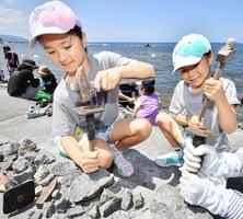 ハンマーで岩を割り化石を探す子どもたち=8月7日、福井県福井市鮎川町