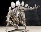 恐竜全身骨格化石を公開組み上げ