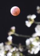 花見ダメなら月見を…4月8日はスーパームーン