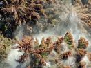 花粉症に免疫療法や服薬が効果的