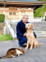 猪苗代昭順副住職に背中をなでてもらうアンディー。猫にも穏やかな性格という=2018年4月、福井県越前市の御誕生寺