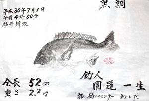圓道さんのチヌ魚拓