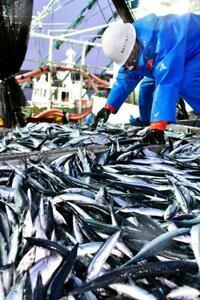 「大型サイド」サンマ、2年連続で過去最低 群れ沖合、漁獲減止まらず