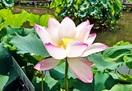 勾当玉女(コウトウノギョクジョ) 花はす公園で…