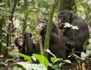 類人猿のボノボ、母は強し
