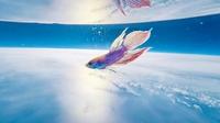 熱帯魚が「宇宙旅行」生還果たす