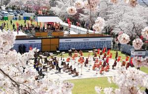 よろいかぶと姿などの高校生を駒に見立て行われた「人間将棋」。満開の桜の下、熱戦が繰り広げられた=20日午後、山形県天童市