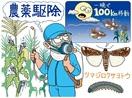【害虫のガ、国内初確認】幼虫が農作物食い荒らし…