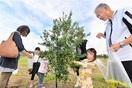 三里浜オリーブ初収穫、特産化弾み