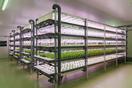 ■植物工場の「建設」から「栽培・運営サポート」ま…