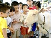 ヤギさんこっち向いて! 幼稚園でふれあい動物園 坂井 みんなで読もう