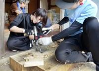 戦国期の椀 再現挑む 11月ケヤキ伐倒 資金募る 鯖江の漆器職人ら