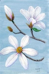 コブシ(辛夷) モクレン科 青空にひときわ映える春の白 レッツ!植物楽