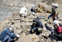 福井県の白亜紀地層、いきなり恐竜の骨化石が続々 恐竜博物館2021年度の発掘調査を開始